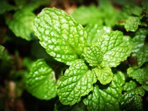 Peppermint is good for balancing the heart chakra